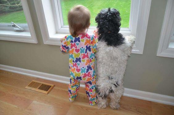 Zu verabschieden - Baby und Hund schauen aus dem Fenster