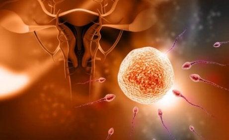 5 Mythen über die Befruchtung