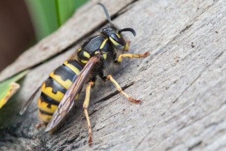 Insektenstiche bei Kindern
