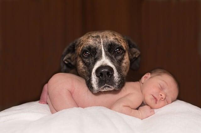 Haustiere und Babys