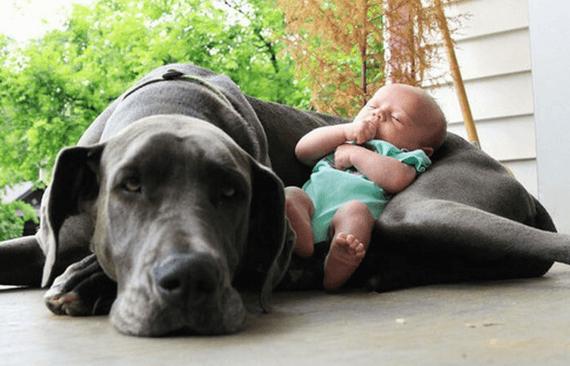 Haustiere und Babys – so gelingt das Zusammenleben!