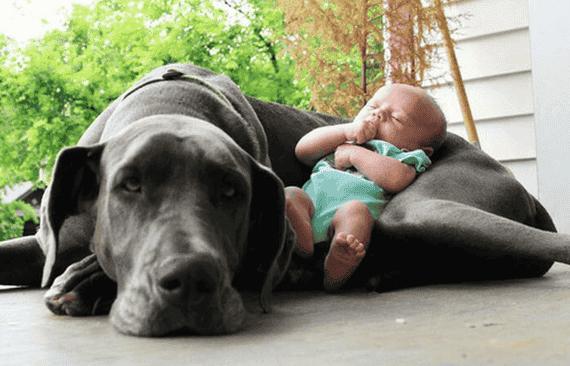 Haustiere und Babys - so gelingt das Zusammenleben!