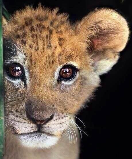 Der Besuch eines Zoos und das Bestaunen aller Tiere dort ist ein Abenteuer für Groß und Klein