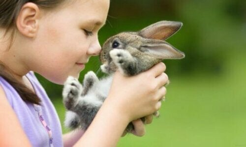 Kaninchen sind großartige Haustiere für Landkinder und Stadtkinder zugleich