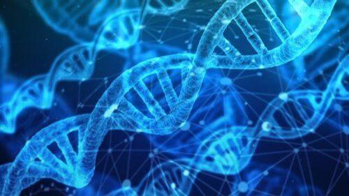 Meiose - DNA